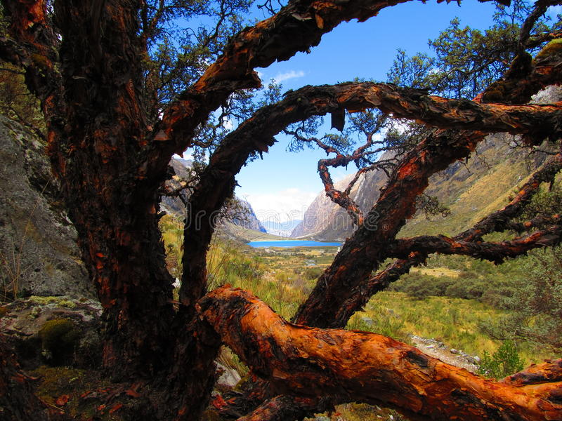 L'arbre de conte de fées images stock