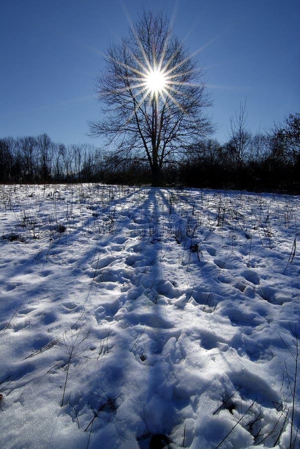 L'arbre de l'inspiration photos libres de droits