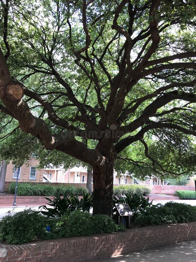 L'arbre de la connaissance sur le campus de l'université de la Caroline du Sud photos stock
