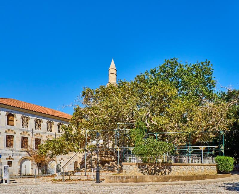 L'arbre de la mosquée de Hippocrate et de Gazi Hassan Kos, Grèce photo libre de droits