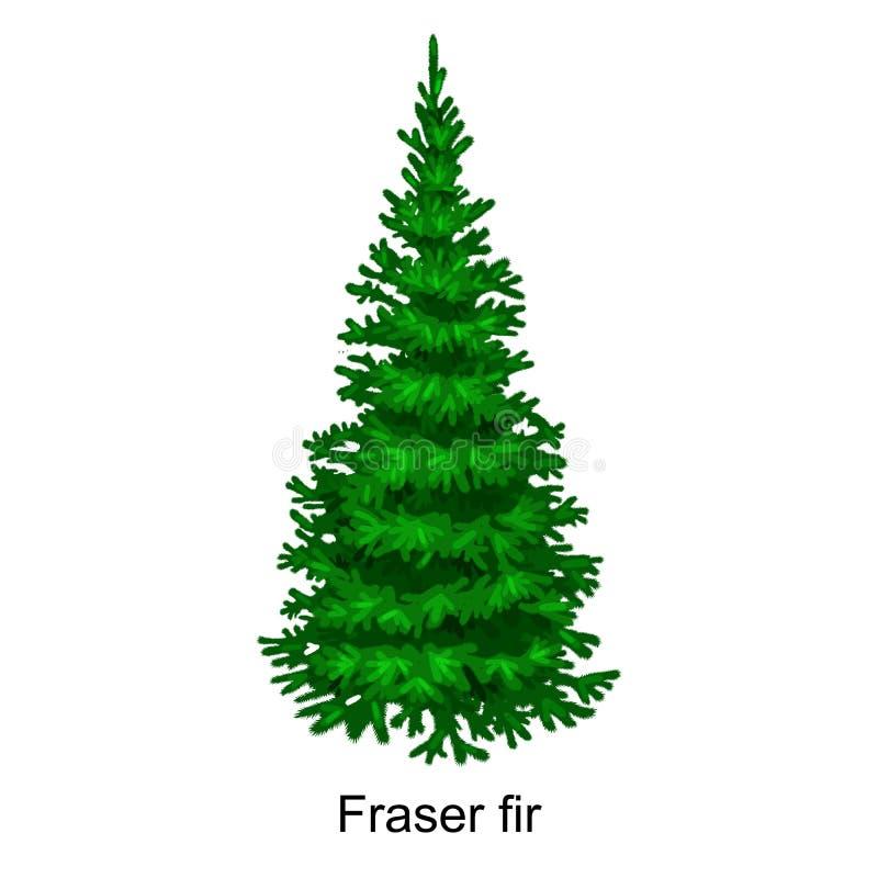 L'arbre de vecteur de Noël aiment le sapin de fraser pour la célébration de nouvelle année sans décoration de vacances, usines à  illustration stock