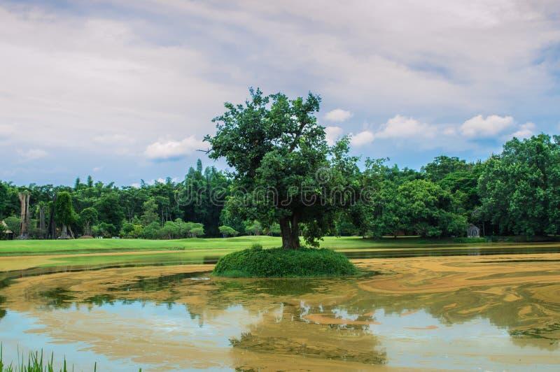 L'arbre en étang et ciel bleu image stock