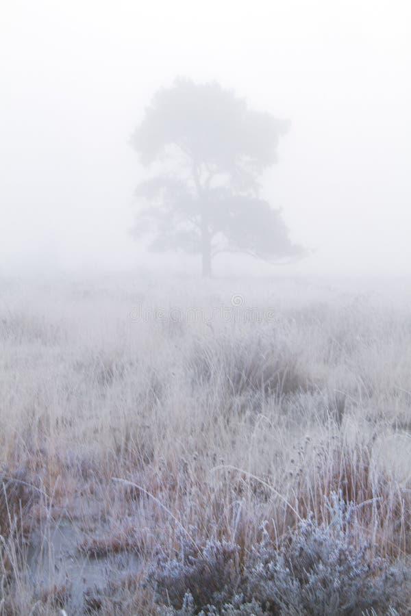 L'arbre en brume amarrent dessus image stock