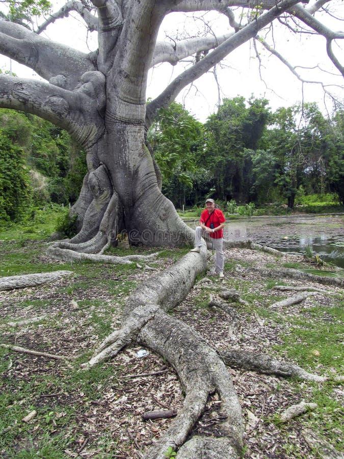 L'arbre enracine la forme fabuleuse bizarre avec un homme dans un chapeau photos libres de droits