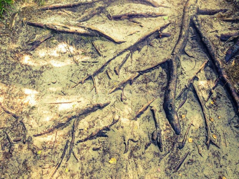 L'arbre enracine le fond photographie stock libre de droits