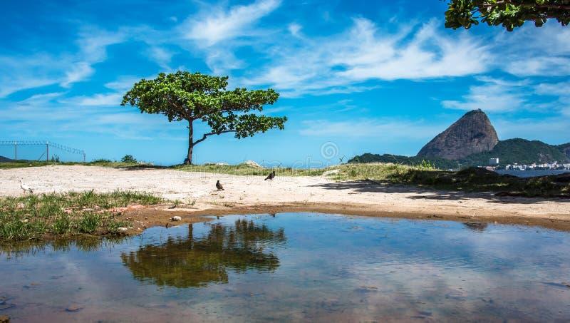 L'arbre et le Guanabara verts aboient au jour ensoleillé avec la montagne de Sugarloaf à l'arrière-plan, Rio De Janeiro, Brésil photo stock