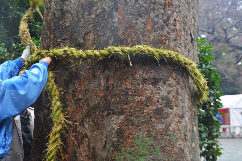 L'arbre et le Shimenawa sacrés dans le tombeau japonais photographie stock