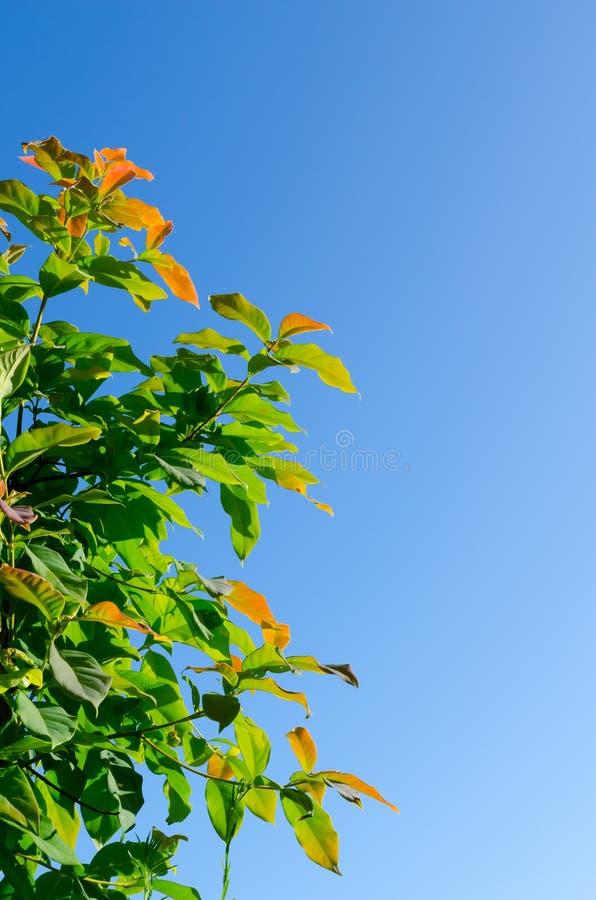 L'arbre forestier et le ciel bleu photographie stock