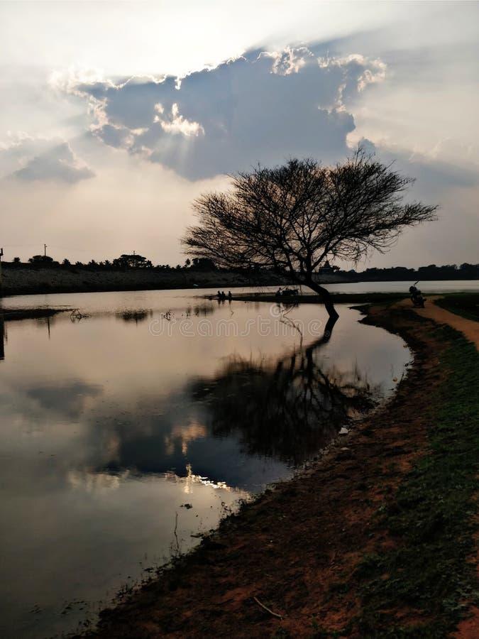 L'arbre isolé photos libres de droits