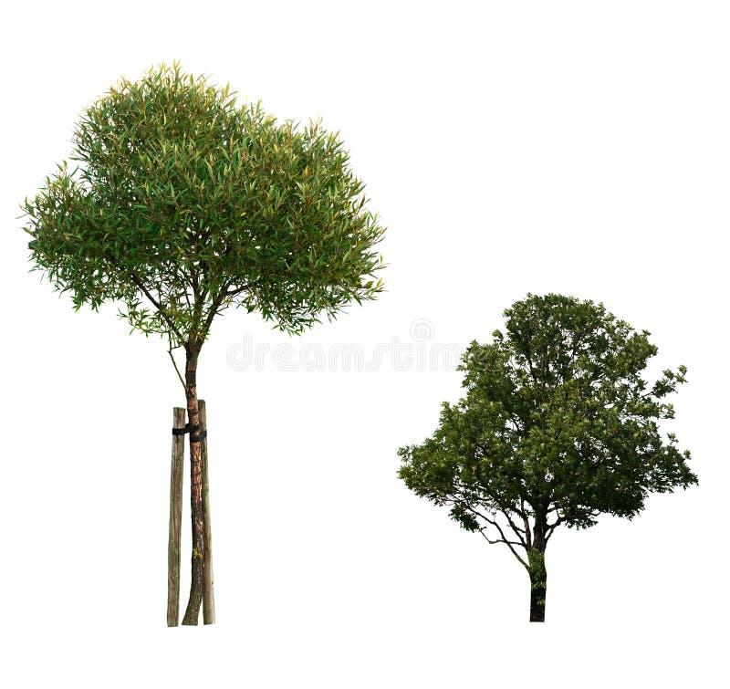 L'arbre a isolé photographie stock libre de droits