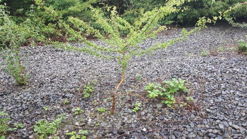 L'arbre isolé images stock