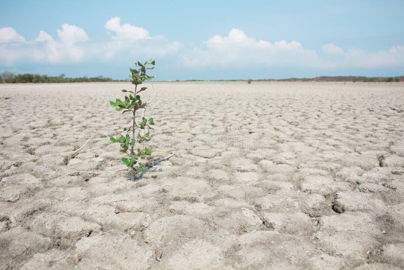L'arbre isolé, au sol aride photographie stock