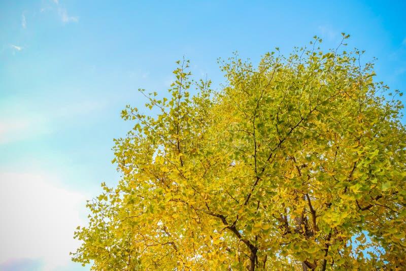 L'arbre jaune photographie stock libre de droits