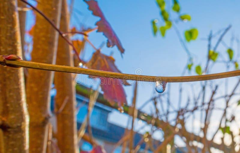 L'arbre nu après pluie dans la feuille d'automne colore au soleil à la chute photographie stock libre de droits