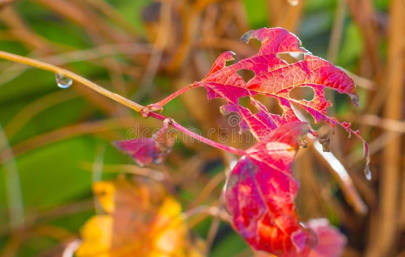 L'arbre nu après pluie dans la feuille d'automne colore au soleil à la chute photographie stock