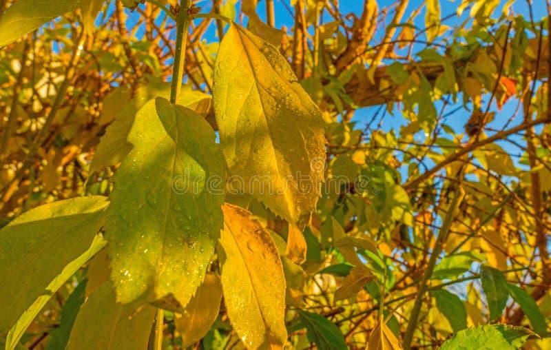 L'arbre nu après pluie dans la feuille d'automne colore au soleil à la chute image libre de droits