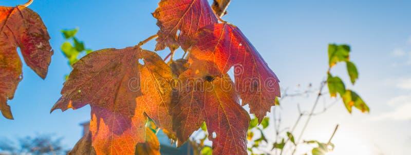 L'arbre nu après pluie dans la feuille d'automne colore au soleil à la chute photo stock