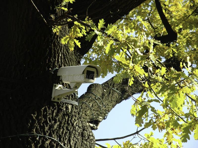 L'arbre qui voit images stock
