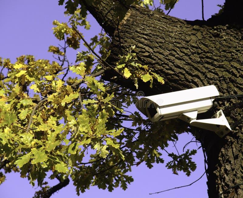 L'arbre qui voit photo stock