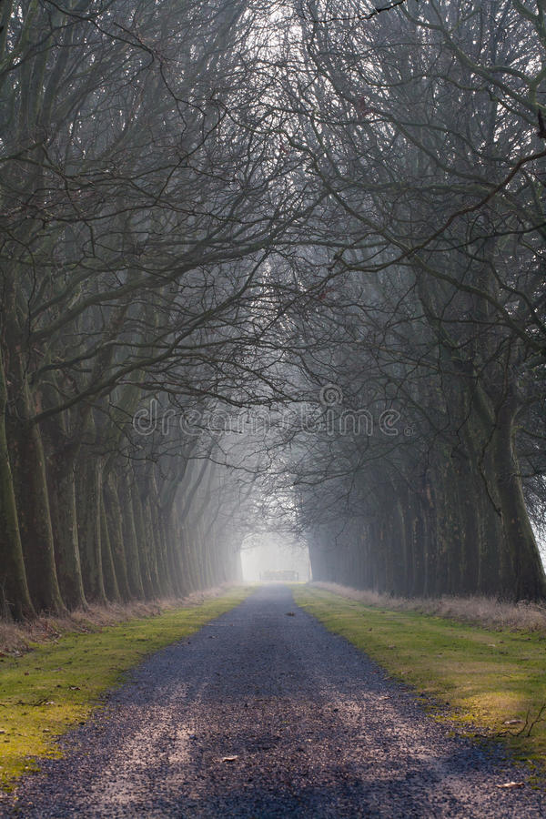 L'arbre a rayé la route photos libres de droits