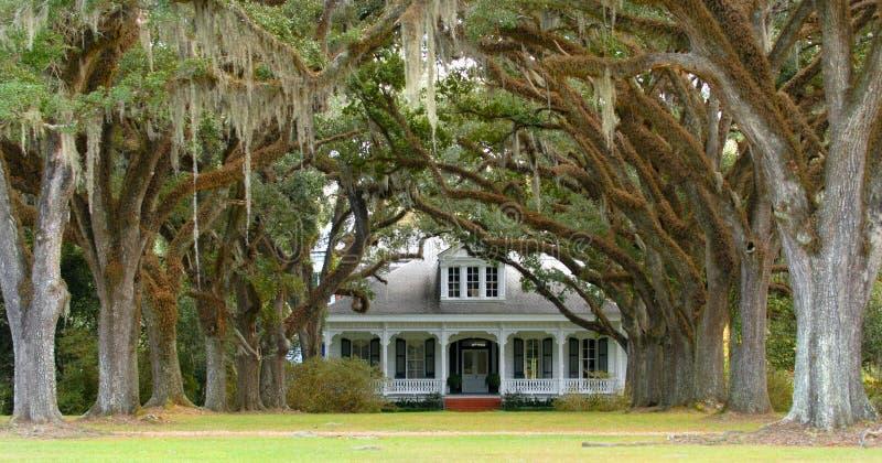 L'arbre a rayé la voie à la maison méridionale à l'arrière-plan images stock