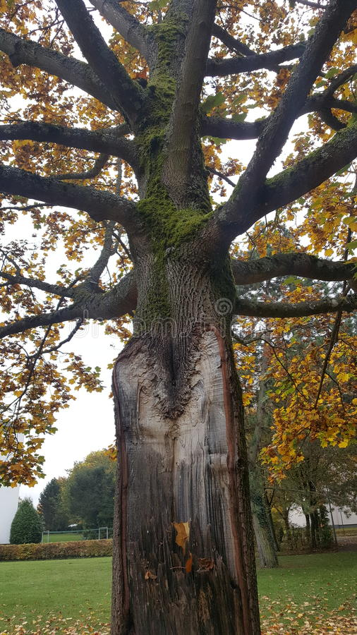 L'arbre rencontre un éclair photographie stock libre de droits
