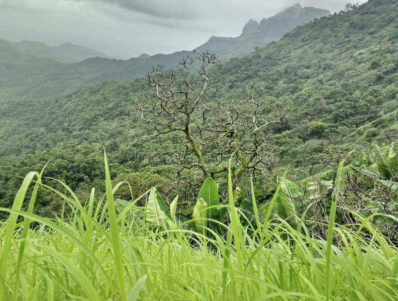 L'arbre sans feuilles photographie stock libre de droits