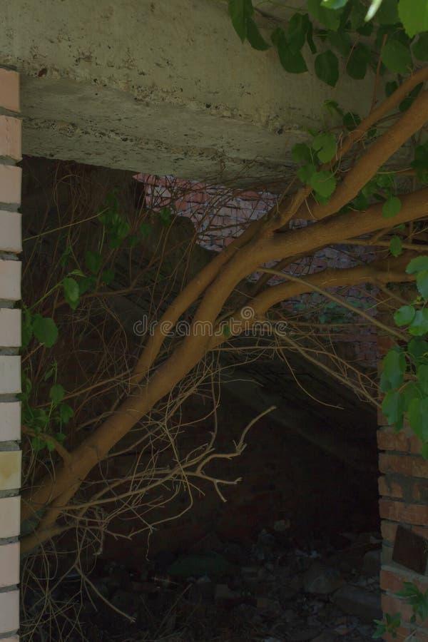 L'arbre se d?veloppe au cours des ann?es dans un b?timent non fini abandonn? par une porte photographie stock libre de droits