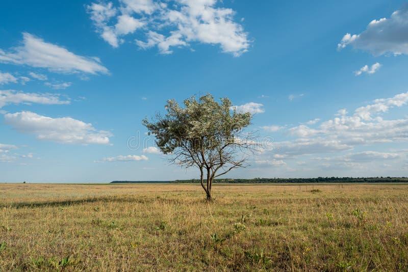 L'arbre simple dans le paysage de champ d'herbe verte d'été opacifie le ciel bleu image stock