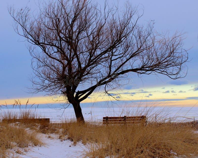 L'arbre solitaire images stock