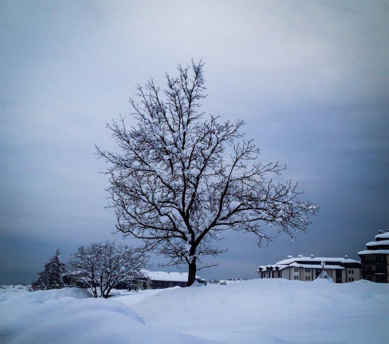 L'arbre solitaire dans une neige a couvert la ville image libre de droits