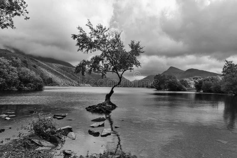 L'arbre solitaire - Llanberis Pays de Galles du nord R-U image libre de droits