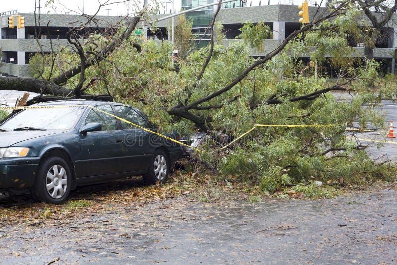 L'arbre tombe sur le véhicule images stock
