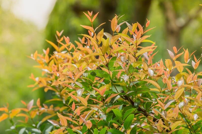 L'arbre a un brun crémeux doux image libre de droits