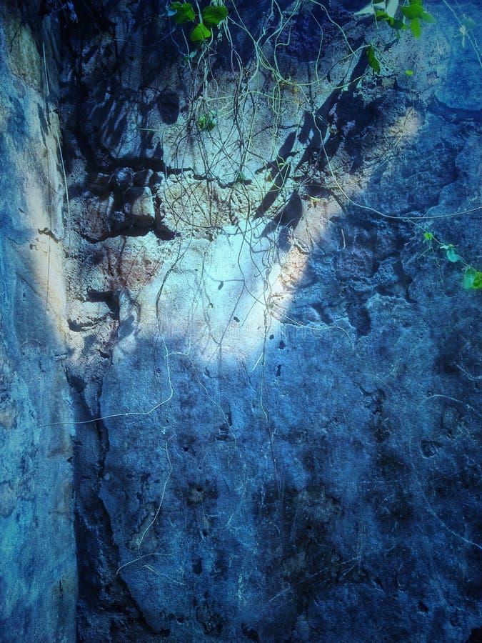 L'arbre veine la chute sur un mur intérieur d'un bâtiment de fort dans le fort de Bassein dans l'Inde photographie stock libre de droits