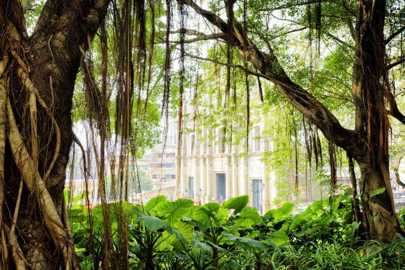 L'arbre vert dans le jardin de ville de Macao image stock