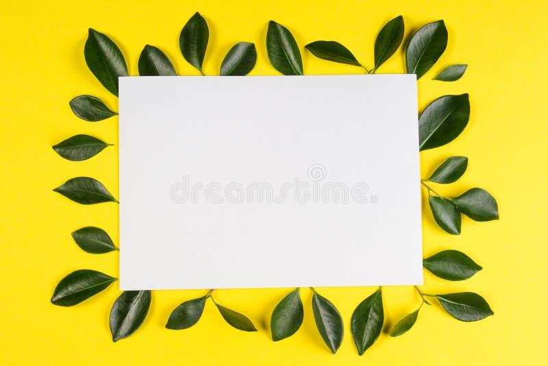 L'arbre vert laisse le cadre avec la carte blanche vierge sur le fond jaune image stock