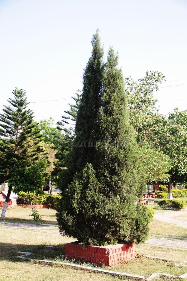 L'arbre vert pour Noël photo stock