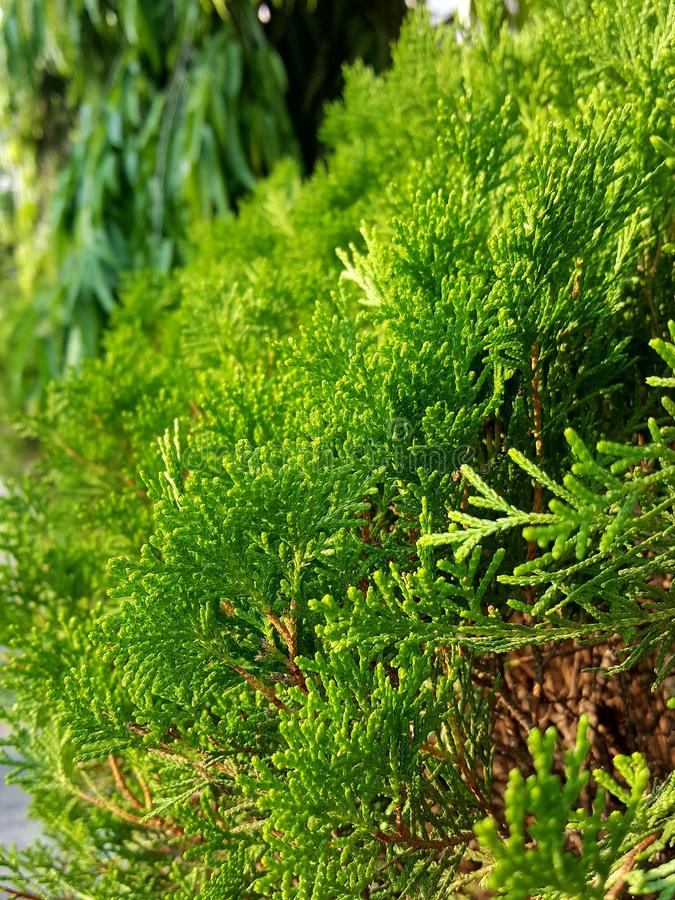 L'arbre vert regarde si gentil photographie stock