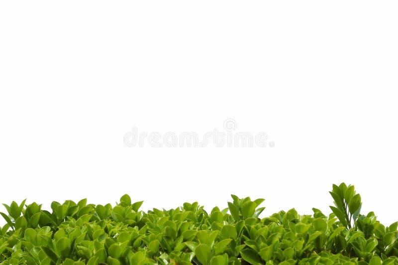 L'arbusto lascia la priorità bassa del bordo illustrazione di stock
