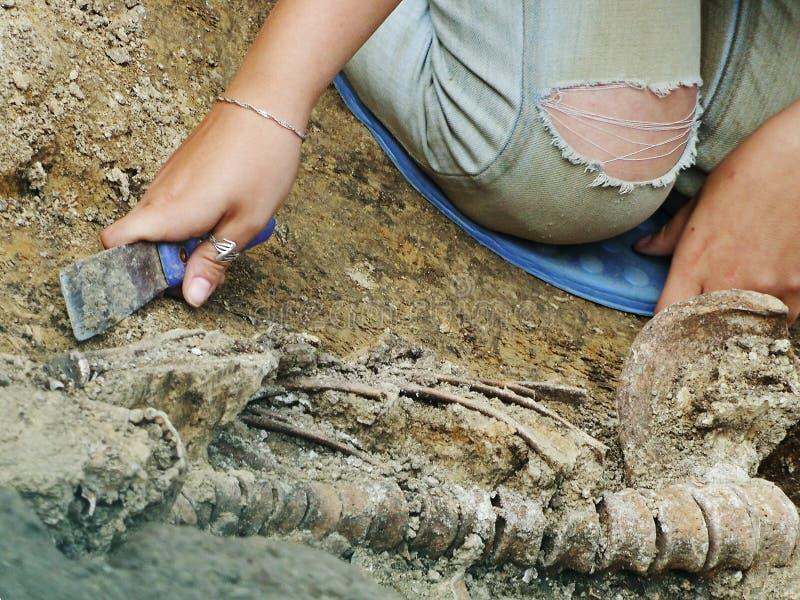 L'archéologue excave des os dans le cimetière photo stock
