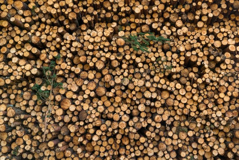 L'area di disboscamento illegale di vegetazione nella foresta ha tagliato la t immagini stock libere da diritti