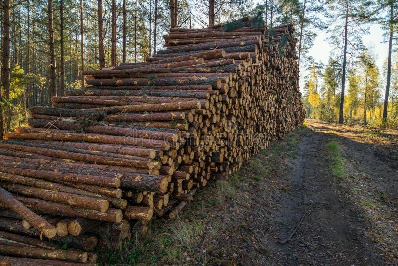 L'area di disboscamento illegale di vegetazione nella foresta ha tagliato la t fotografie stock