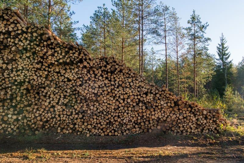 L'area di disboscamento illegale di vegetazione nella foresta ha tagliato la t fotografia stock