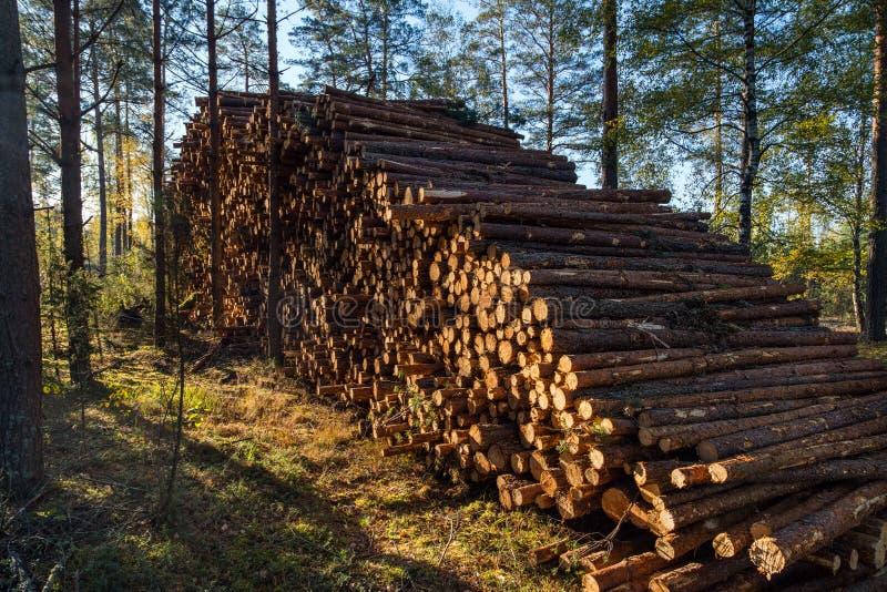 L'area di disboscamento illegale di vegetazione nella foresta ha tagliato la t fotografia stock libera da diritti