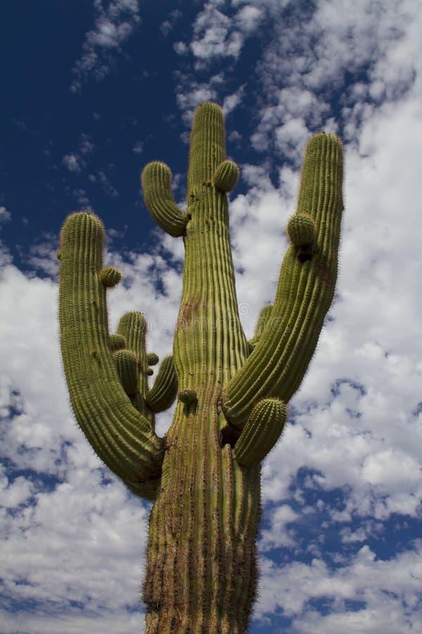 l'Arizona image stock
