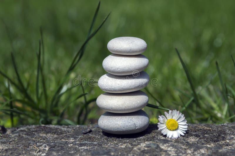 L'armonia e l'equilibrio, ciottoli semplici si elevano e fiore della margherita in fioritura nell'erba, semplicità, cinque pietre fotografia stock libera da diritti