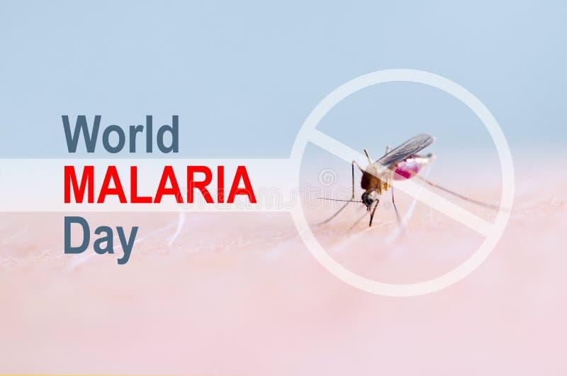 L'arrêt, interdisent se connectent la peau humaine de morsure de moustique, sang humain dans l'estomac d'insecte Jour de malaria  image libre de droits
