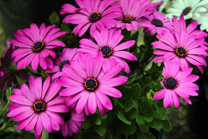 L'arrangement floral de différentes couleurs décorent le jardin, la maison ou le bureau image libre de droits