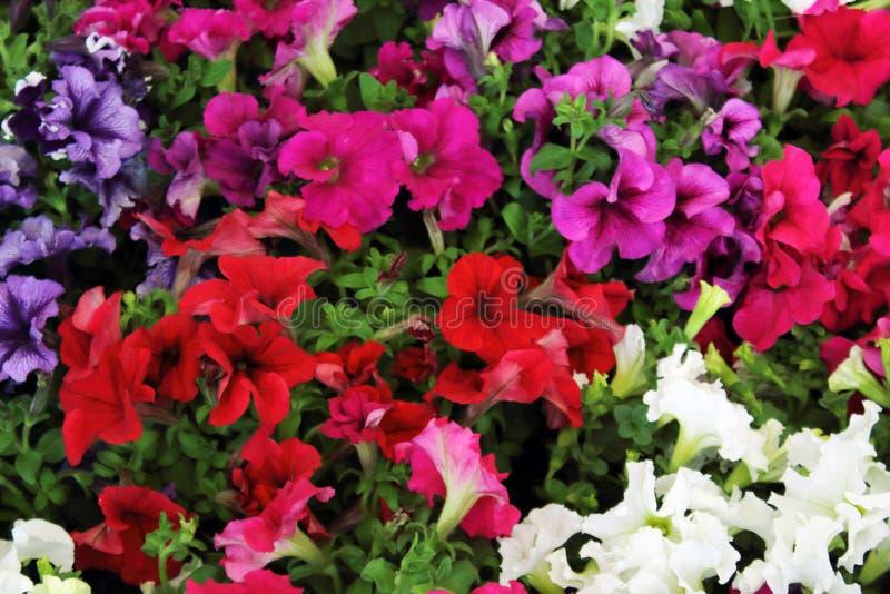 L'arrangement floral de différentes couleurs décorent le jardin, la maison ou le bureau photo stock